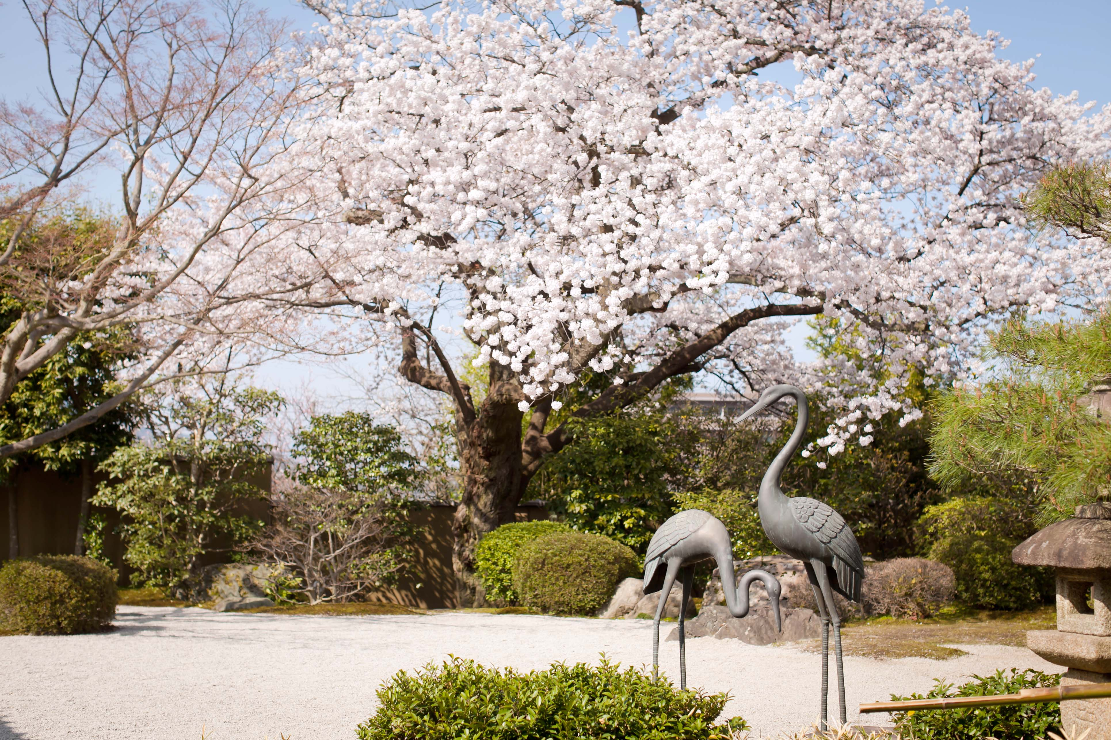 フロアガイド和庭桜.jpg