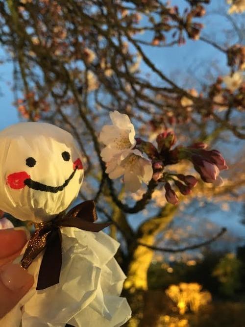 4.1桜.jpg